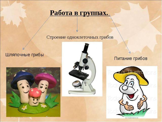* * Работа в группах. Строение одноклеточных грибов Шляпочные грибы Питание г...