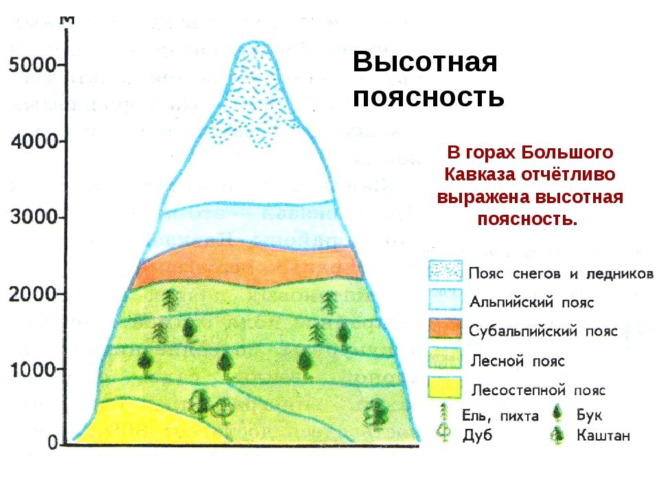 В горах Большого Кавказа отчётливо выражена высотная поясность. Высотная пояс...