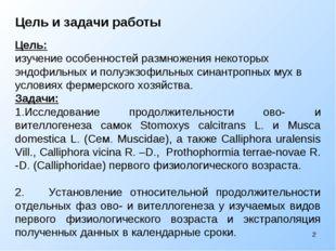 Цель и задачи работы Цель: изучение особенностей размножения некоторых эндофи