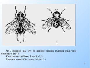 Рис.1. Внешний вид мух со спинной стороны (Словарь-справочник энтомолога, 19