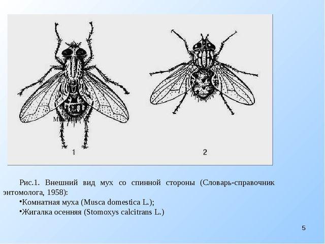 Рис.1. Внешний вид мух со спинной стороны (Словарь-справочник энтомолога, 19...