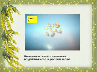 Фото. 6 Эксперимент показал, что степень воздействия слов на растения велика.