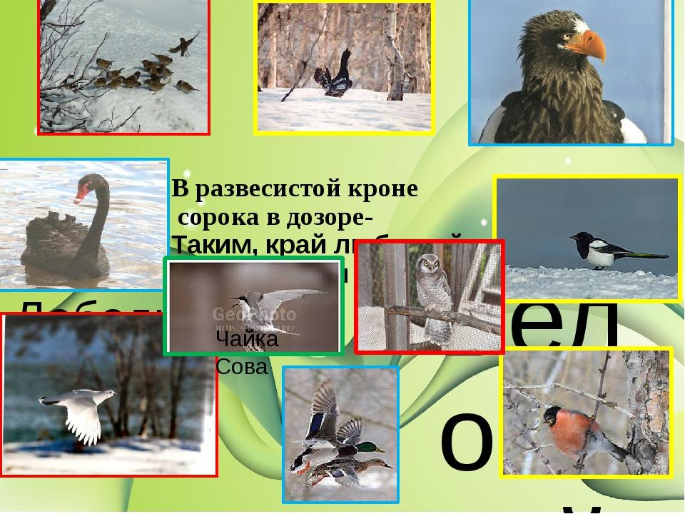 Белоплечий орлан снегирь В развесистой кроне сорока в дозоре- Таким, край лю...