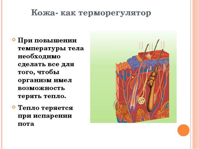 Кожа- как терморегулятор При повышении температуры тела необходимо сделать вс...