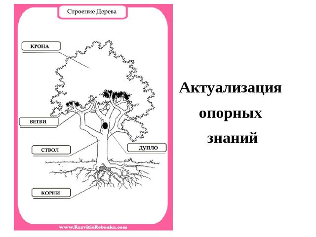 Картинка дерева Актуализация опорных знаний