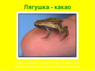 Лягушка - какао Самая маленькая лягушка в мире, её длина 2 см. Обладает самым