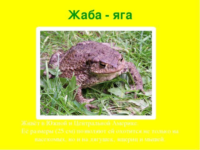 Жаба - яга Живёт в Южной и Центральной Америке. Её размеры (25 см) позволяют...