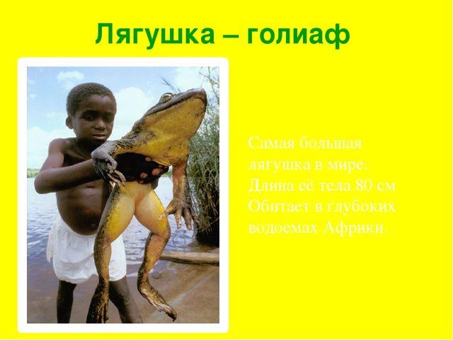 Лягушка – голиаф Самая большая лягушка в мире. Длина её тела 80 см Обитает в...