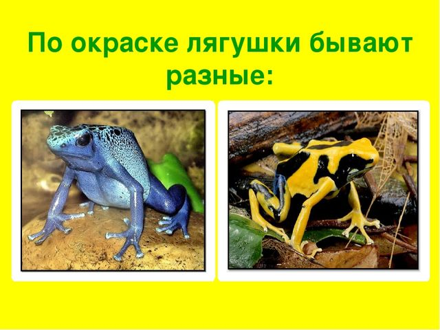 По окраске лягушки бывают разные: