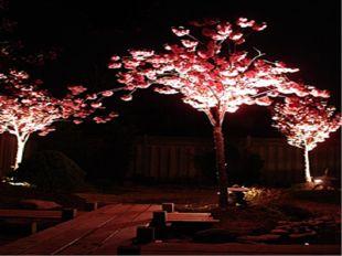 Ночное Ханами называется «Иосакура» или «ночная сакура»