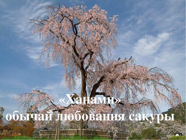 Хаару – весна, время цветения декоративной вишни сакуры «Ханами» обычай любов...