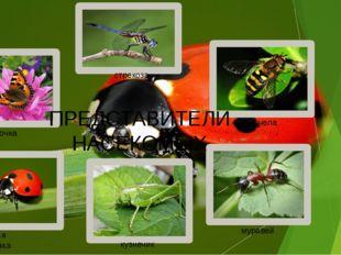 бабочка стрекоза пчела Божья коровка кузнечик муравей ПРЕДСТАВИТЕЛИ НАСЕКОМЫХ
