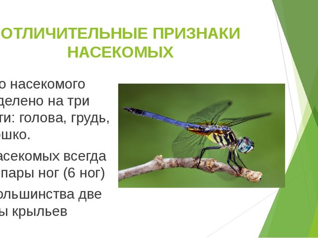 ОТЛИЧИТЕЛЬНЫЕ ПРИЗНАКИ НАСЕКОМЫХ Тело насекомого разделено на три части: голо...