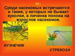 НО ! Среди насекомых встречаются и такие, у которых не бывает куколки, а лич