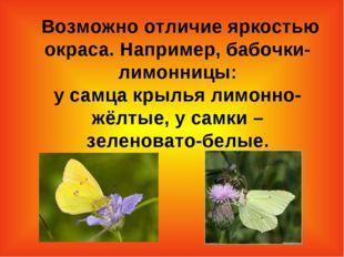 Возможно отличие яркостью окраса. Например, бабочки-лимонницы: у самца крыль