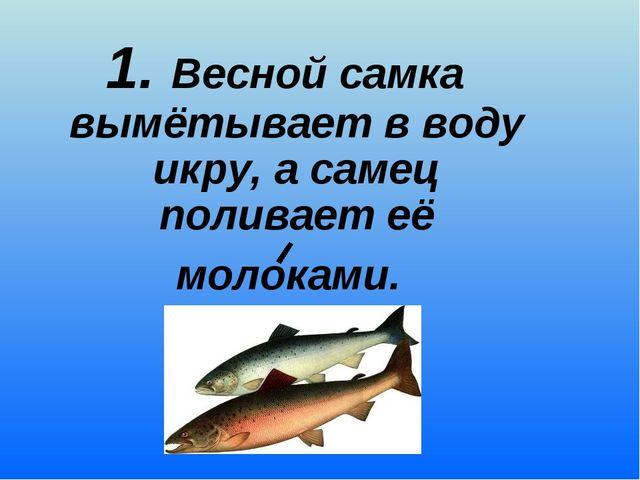 1. Весной самка вымётывает в воду икру, а самец поливает её молоками.