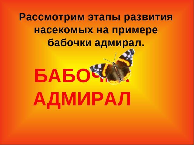 БАБОЧКА АДМИРАЛ Рассмотрим этапы развития насекомых на примере бабочки адмир...