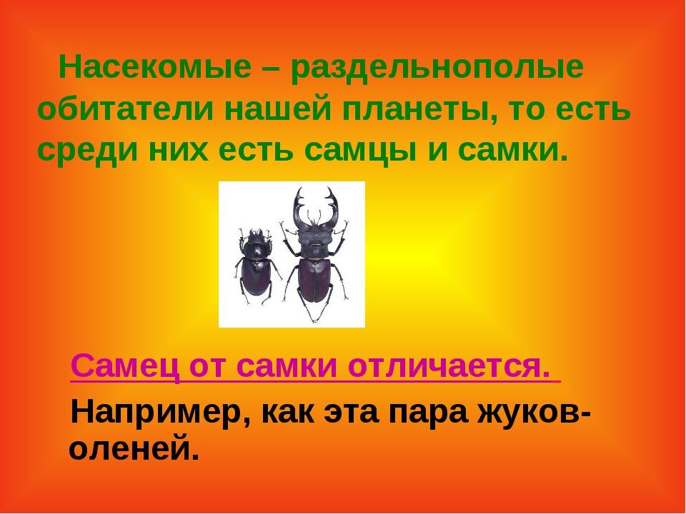 Насекомые – раздельнополые обитатели нашей планеты, то есть среди них есть с...