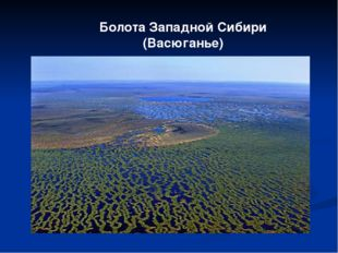 Болота Западной Сибири (Васюганье)