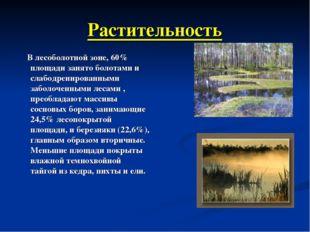 Растительность В лесоболотной зоне, 60% площади занято болотами и слабодренир