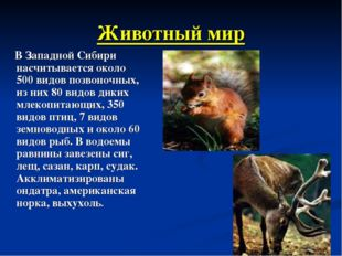 Животный мир В Западной Сибири насчитывается около 500 видов позвоночных, из