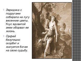 Эвридика с подругами собирала на лугу весенние цветы. Укус ядовитой змеи обо