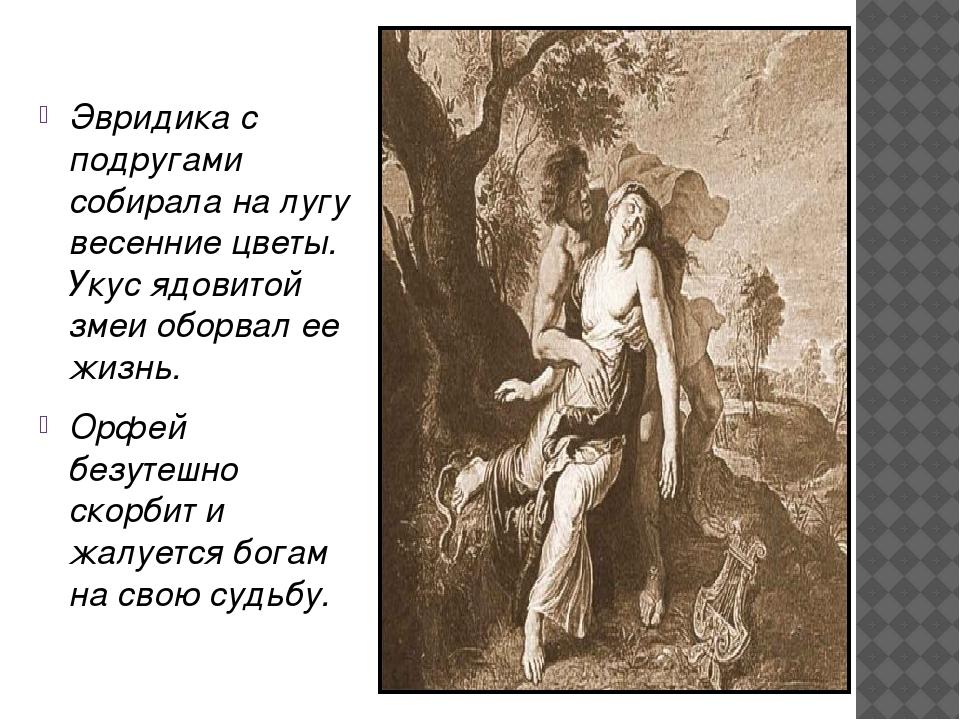 Эвридика с подругами собирала на лугу весенние цветы. Укус ядовитой змеи обо...