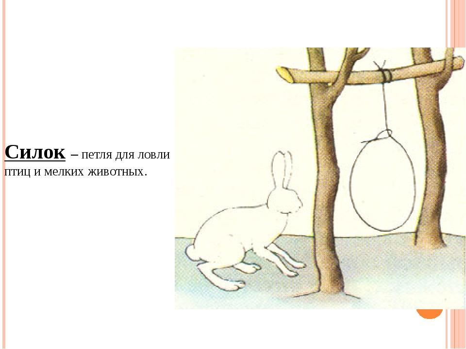 голубцы, картинки ловушек на зайца именно таким