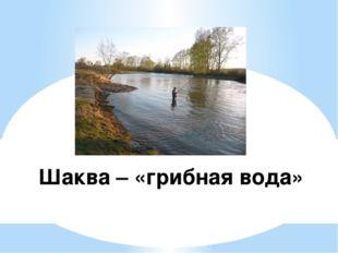 Шаква – «грибная вода»