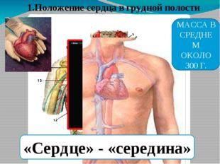 1.Положение сердца в грудной полости «Сердце» - «середина» МАССА В СРЕДНЕМ ОК