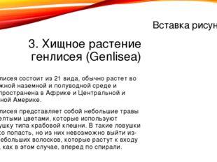 3. Хищное растение генлисея (Genlisea) Генлисея состоит из 21 вида, обычно ра