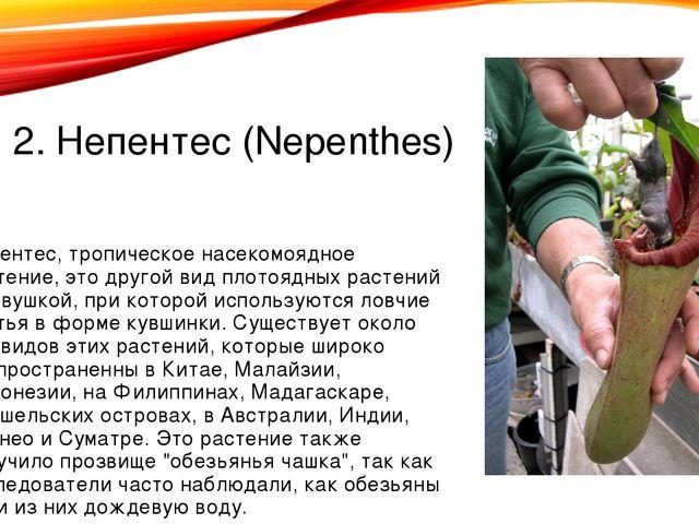 2. Непентес (Nepenthes) Непентес, тропическое насекомоядное растение, это дру...