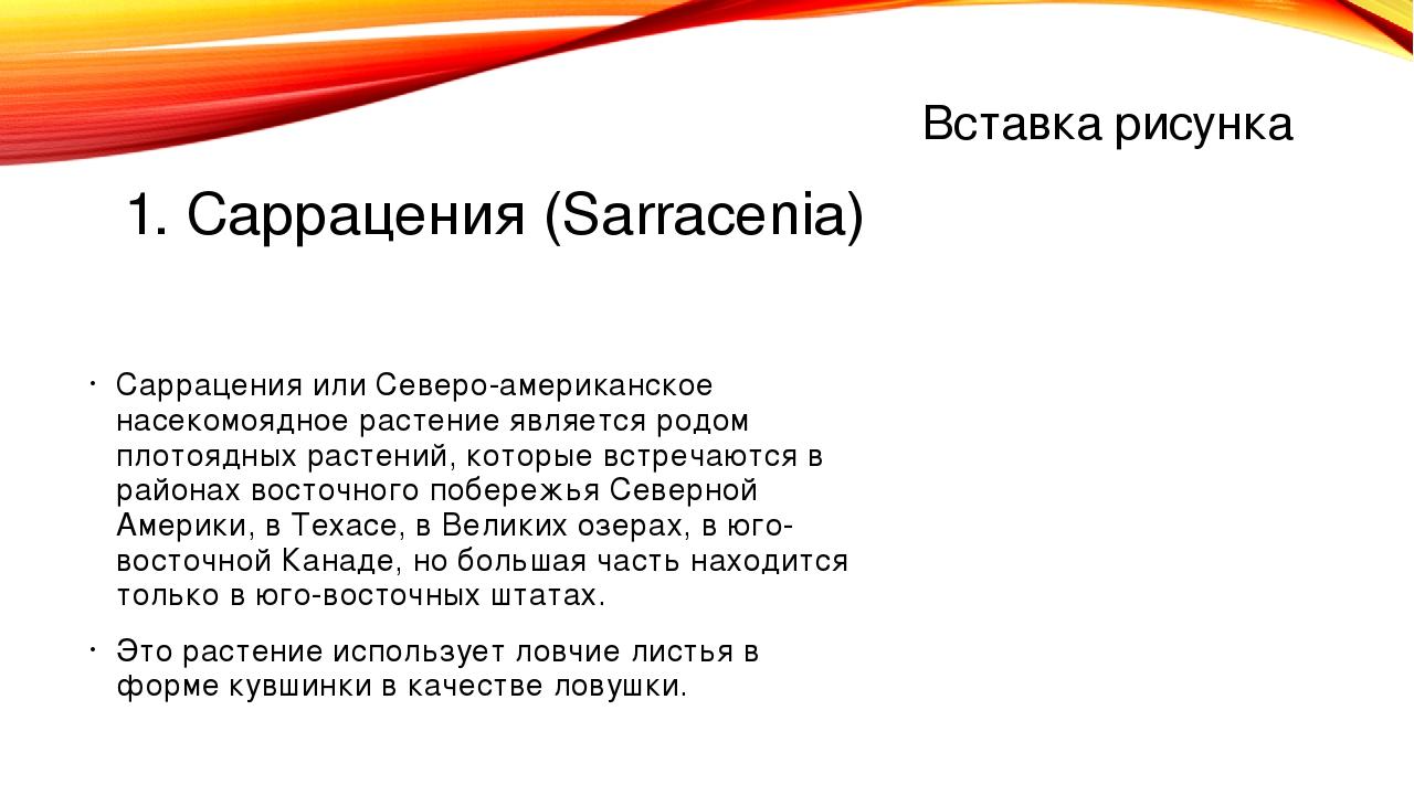1. Саррацения (Sarracenia) Саррацения или Северо-американское насекомоядное р...
