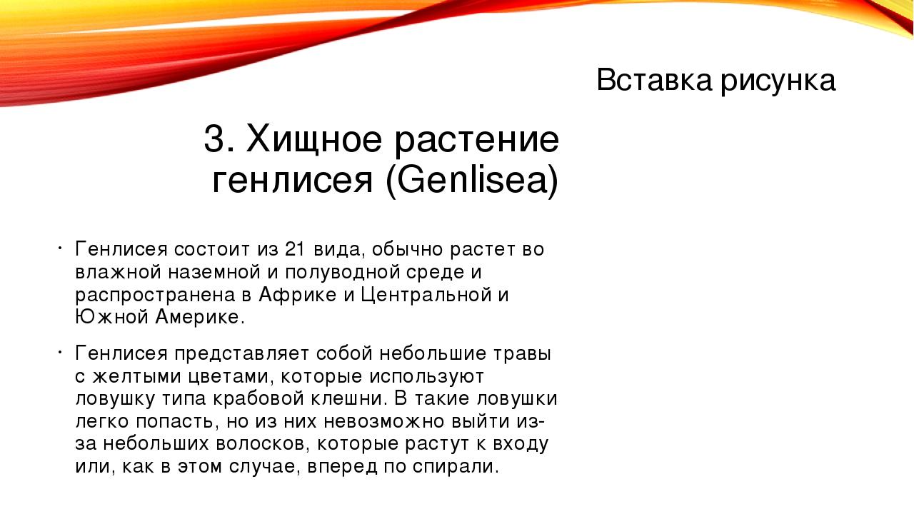 3. Хищное растение генлисея (Genlisea) Генлисея состоит из 21 вида, обычно ра...