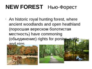 NEW FOREST Нью-Форест An historic royal hunting forest, where ancient woodlan