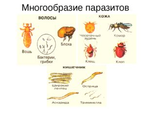 Многообразие паразитов