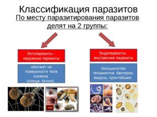 Классификация паразитов По месту паразитирования паразитов делят на 2 группы: