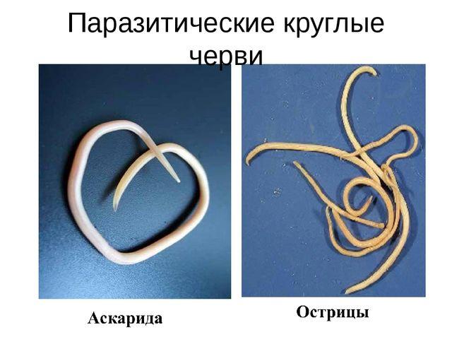 Паразитические круглые черви