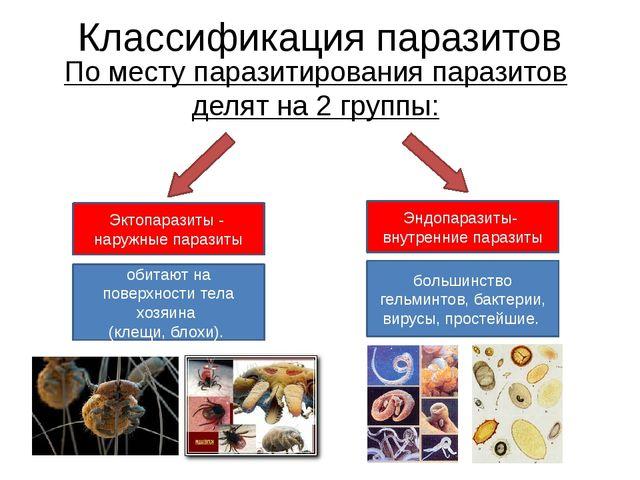 Классификация паразитов По месту паразитирования паразитов делят на 2 группы:...