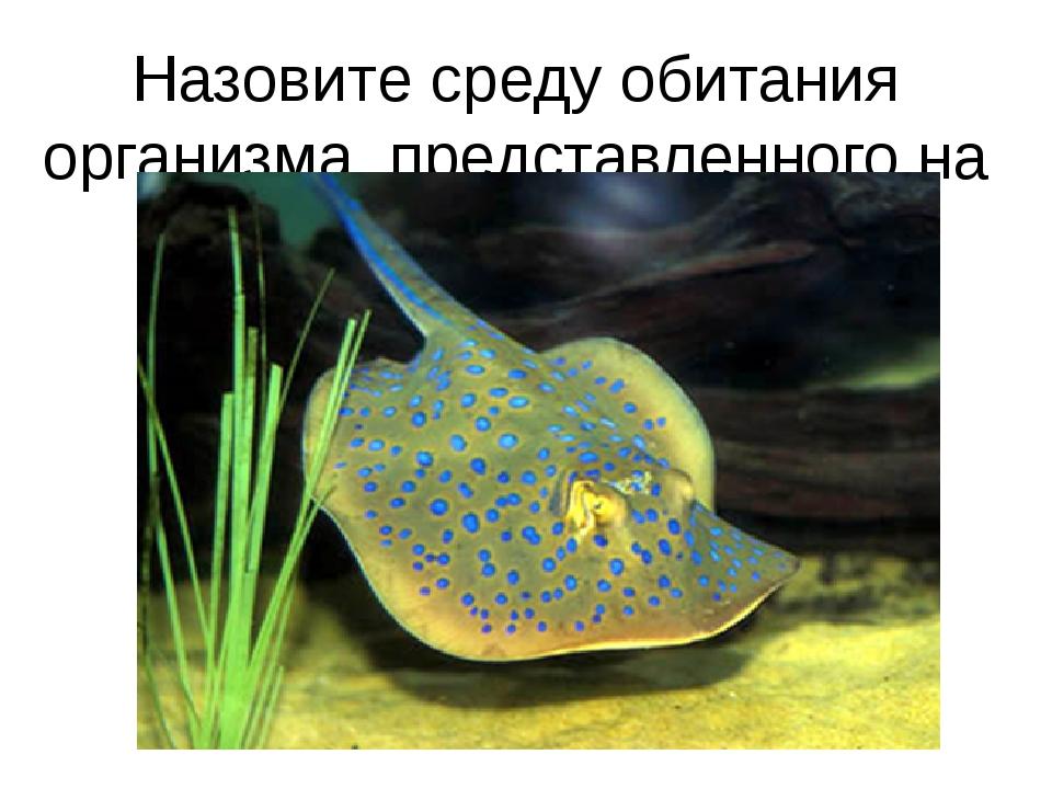 Назовите среду обитания организма, представленного на слайде