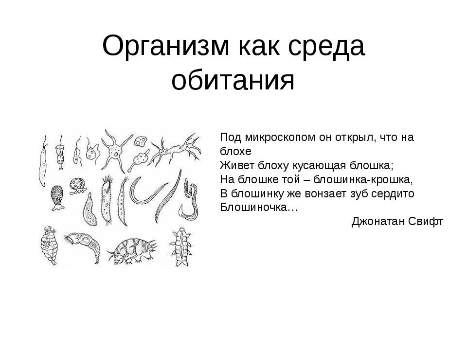Организм как среда обитания Под микроскопом он открыл, что на блохе Живет бло...
