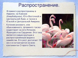 Распространение. Фламинго распространены в Африке, на Кавказе (Азербайджан),