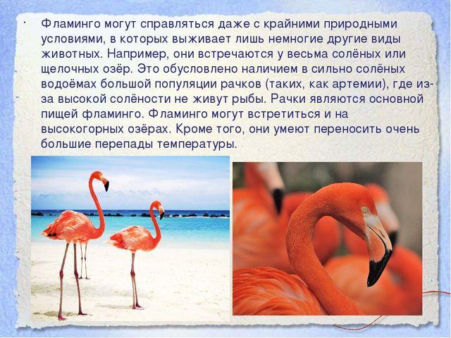 Фламинго могут справляться даже с крайними природными условиями, в которых вы...