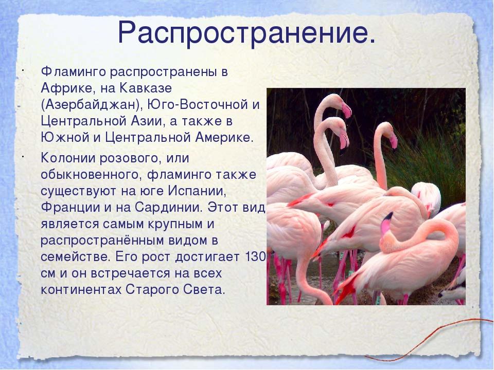 Распространение. Фламинго распространены в Африке, на Кавказе (Азербайджан),...