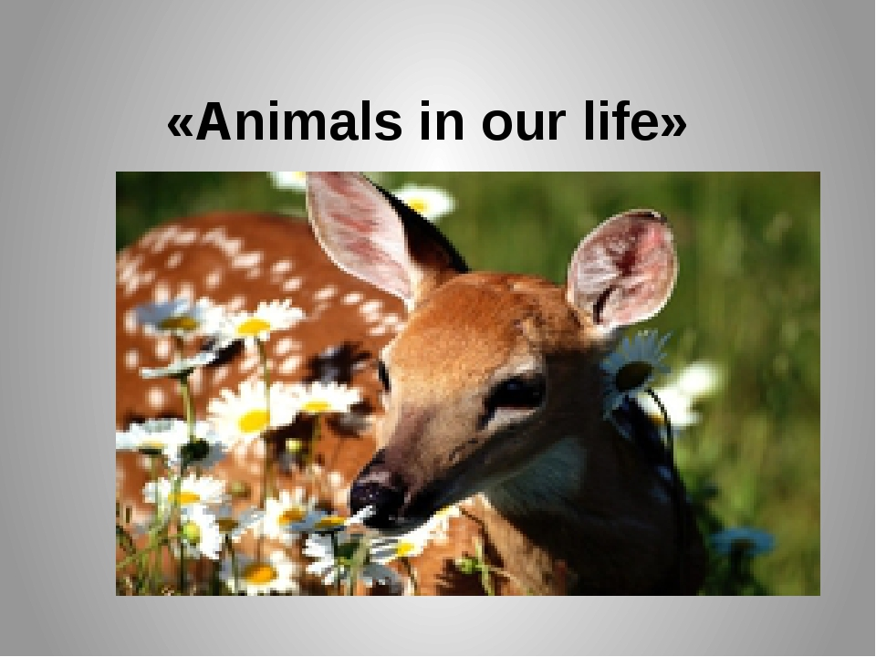 «Animals in our life»