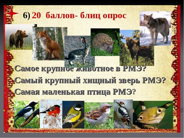 6) 20 баллов- блиц опрос Самое крупное животное в РМЭ? Самый крупный хищный з...