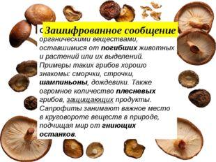 Сапрофиты питаются органическими веществами, оставшимися от погибших животны