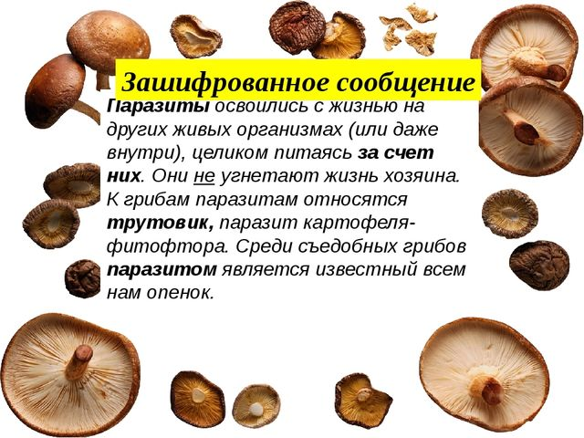 Паразиты освоились с жизнью на других живых организмах (или даже внутри), це...