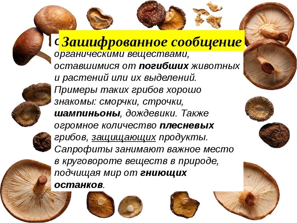 Сапрофиты питаются органическими веществами, оставшимися от погибших животны...