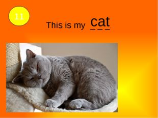 This is my _ _ _. 11 cat